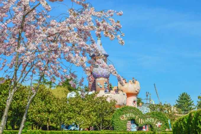 Disneyland Paris Cherry Blossoms by Alice's Castle