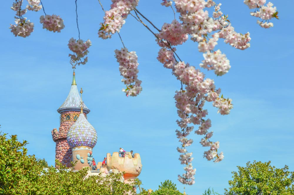 Parc Disneyland Cherry Blossoms