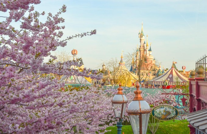 Disneyland Paris Cherry Blossoms Overlooking Fantasyland Castle