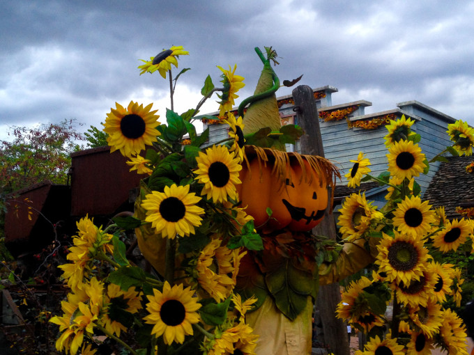 Sunflowers and Pumpkins in Disneyland Paris