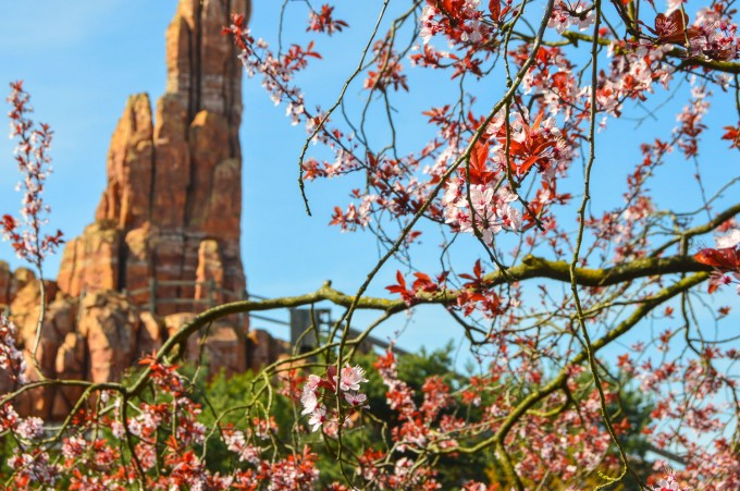 Disneyland Paris Spring Flowers by Thunder Mountain