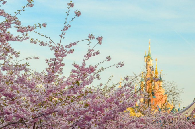 Fantasyland Castle and Disneyland Paris Cherry Blossoms