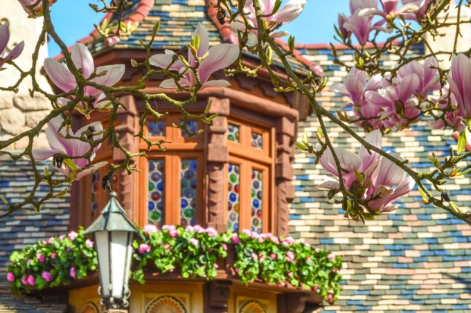 Spring Flowers at Disneyland Paris