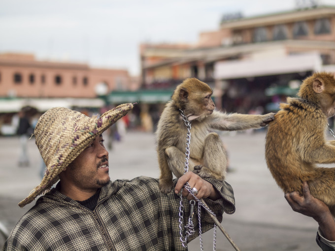 Marrakech Monkey Jemaa el Fna