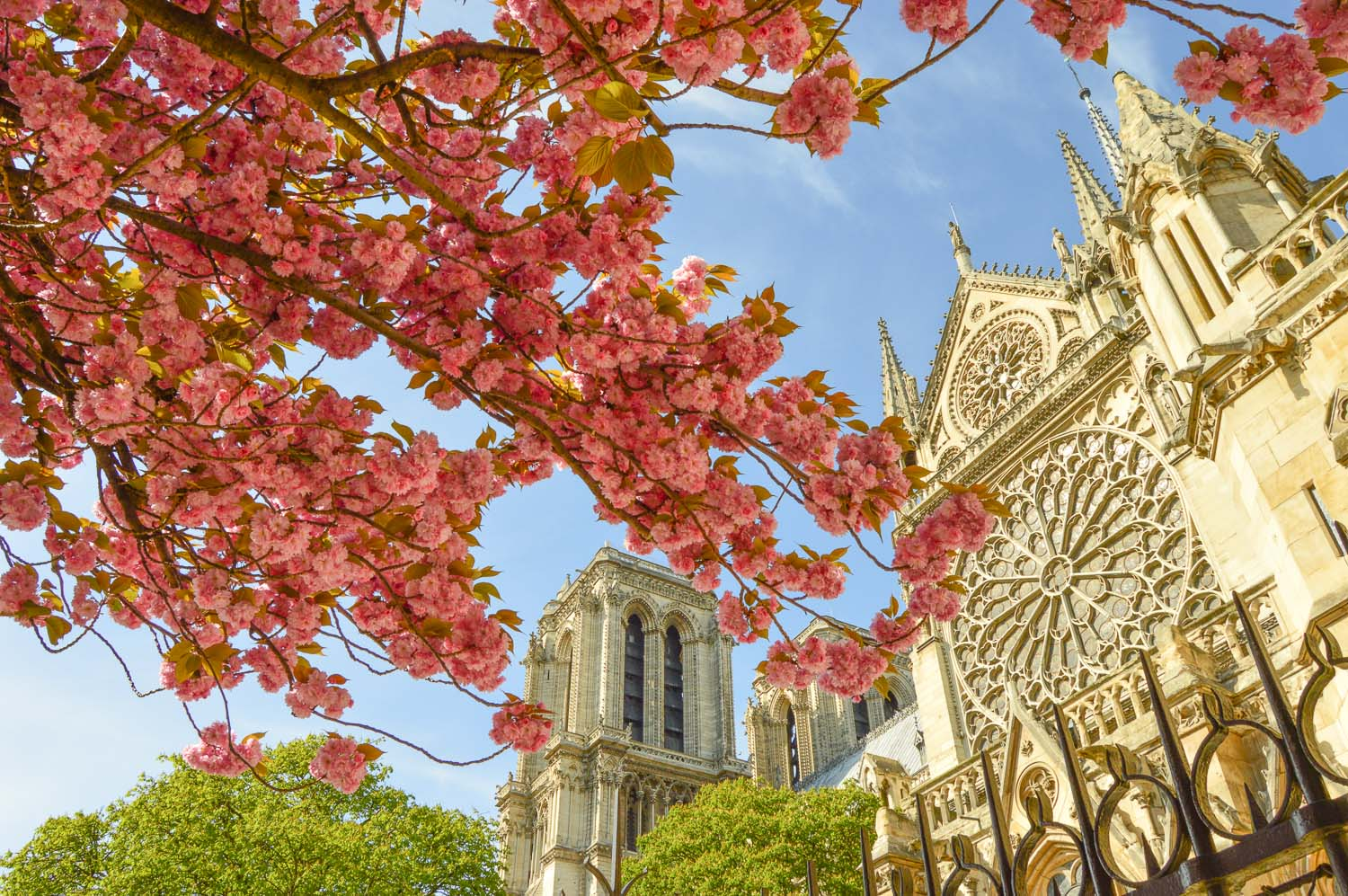 5b9cb34b7 The Best Places to See Cherry Blossoms in Paris