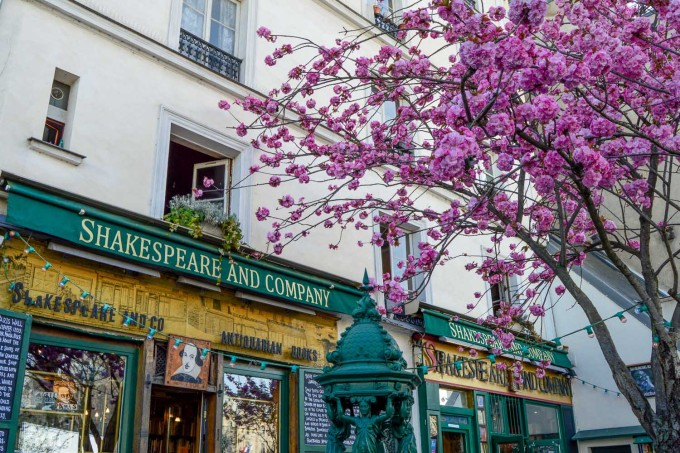 Shakespeare and Co. Cherry Blossom in Paris