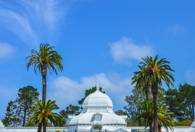 San Francisco Conservatory of Flowers Palm Trees