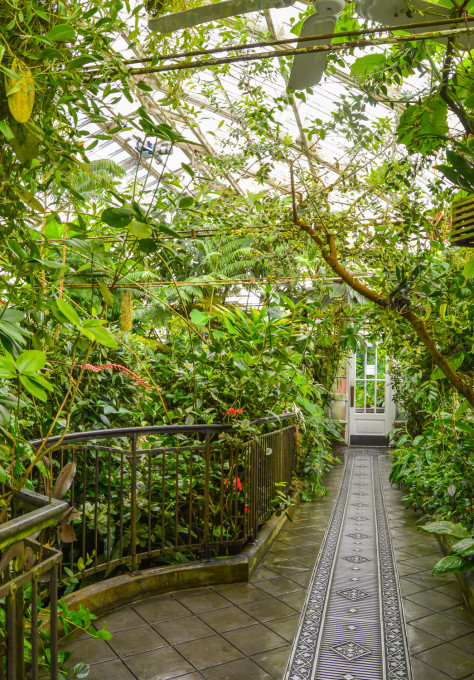 San Francisco Conservatory of Flowers Lowlands Room